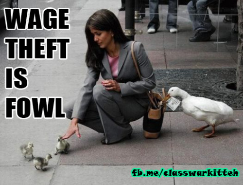 [Image: A duck stealing cash from a person's wallet while the person bends over to pet some ducklings. The caption reads: 'Wage theft is fowl.'] classwarkitteh:  Thank you Chicago, for passing one of the strongest wage theft laws in the country!