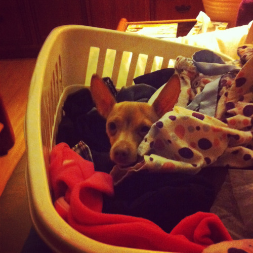 Laundry monster is at it again. Haha!