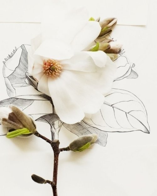 Le bouquet du lundi Magnolia and flower illustration no. 6688 by kariherer © Kari Herer
