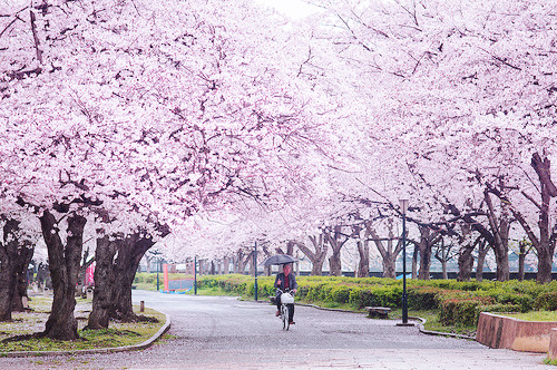 sakuras before 30 #promise   whenfairytalescometrue:  http://weheartit.com/entry/51030355/via/whenfairytalescometrueO whenfairytalescometrue: Follow me ♥ Then ask for one back. http://whenfairytalescometrue.tumblr.com