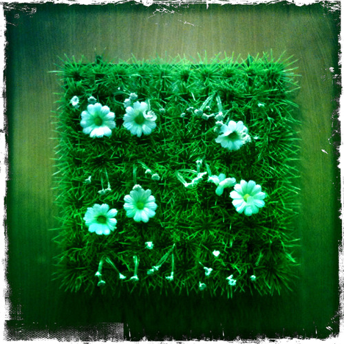 Festival Insolent with grass and daisies on our dressing room wall … nice.