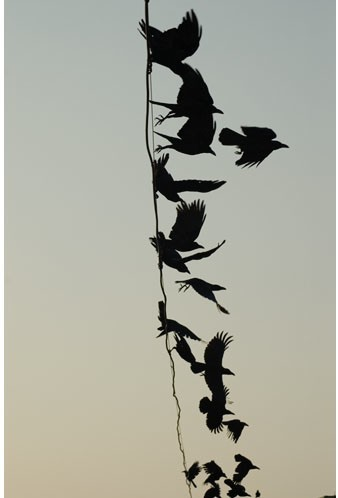 "(via ⁂Art board 12.12⁂ / ""Crow 104″ Meggan Gould)"