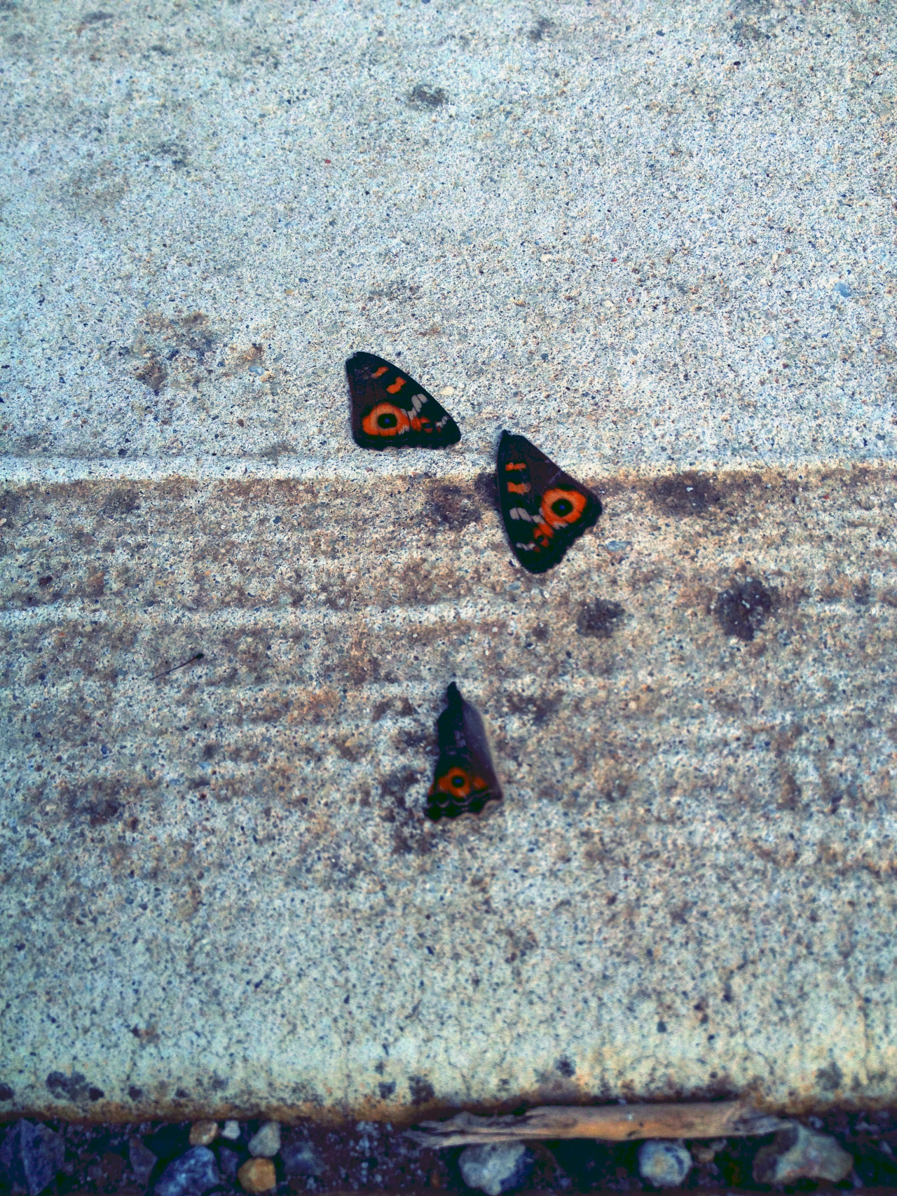 I looked down to the pavement and saw butterfly wings.