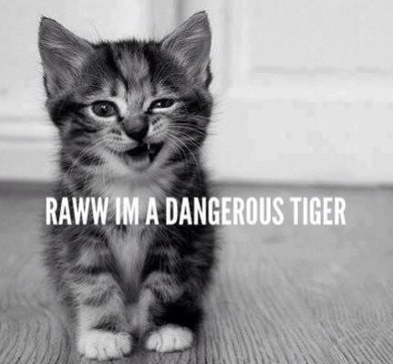 diaperedkittycatboy:  the-faded-annah-kreps:  RAWR!! =^_^=  this cat