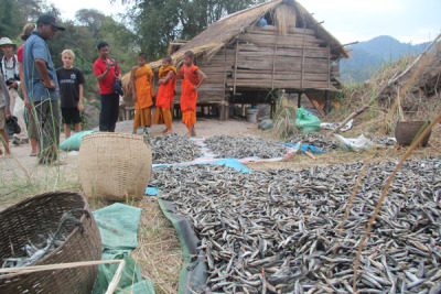 Fish being dried to make a fish paste in a small fishing camp near Khone Falls of the Mekong River, at the Lao-Cambodia border.  Credit: Jeff Opperman/TNC