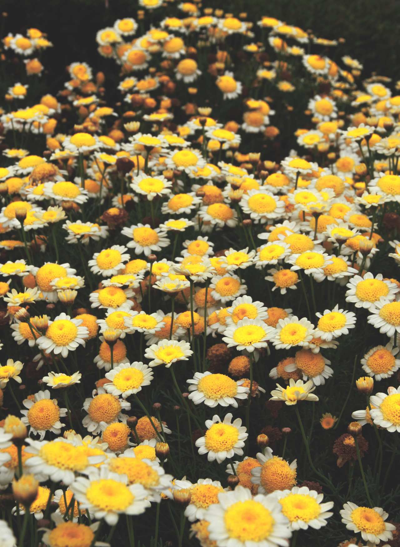 flowers in san francisco, taken by me