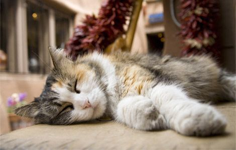thecatsintophats:  A cat stretches out for an afternoon siesta in the New Mexico sun.