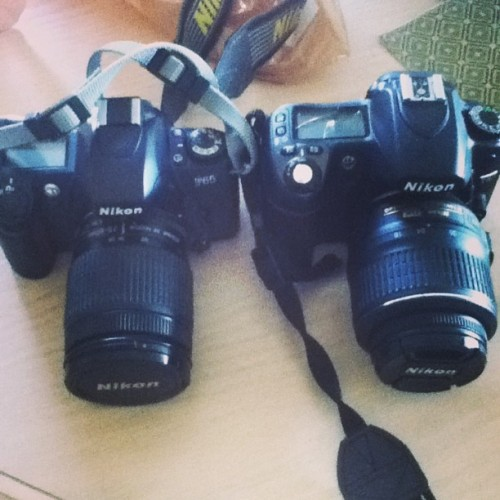 My baby (right) has a new baby brother (left). #nikon