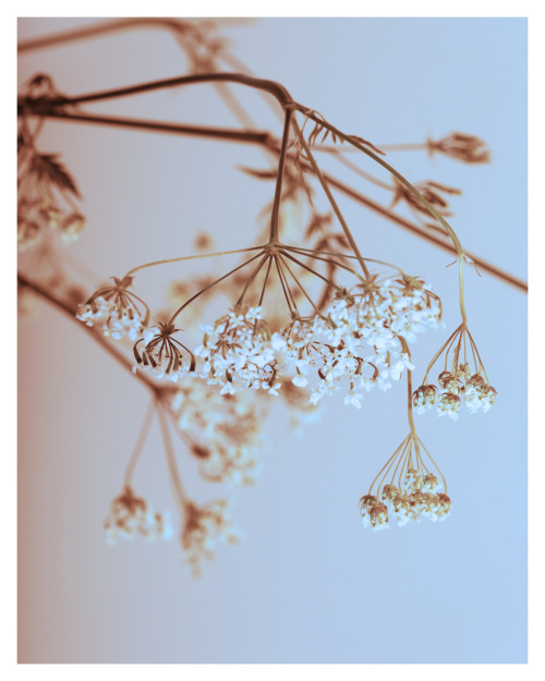 letsmakeourownlight:  By Briony Teasel  Photography Website - Personal Blog I have entered the photography competition, 'Exposure'. If you think I deserve your vote, click here, thank you :)