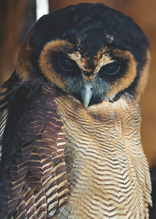"theloversblog:  Medicine: Illuminates deception ""Owl can see that which others cannot, which is the true essence of wisdom. Where others are deceived, Owl sees and knows what is there."" -""Medicine Cards"" by Sams & Carson"