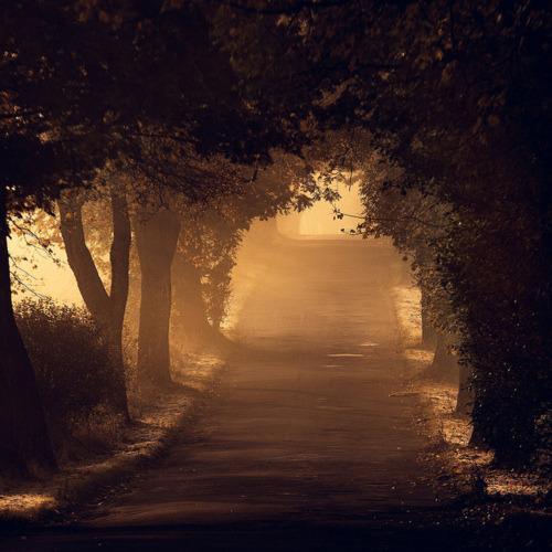 drzewa słońce sun trees piękne beautiful wonderful droga