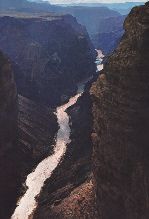 setbabiesonfire:  leave—butdontleaveme:  Colorado River before Toroweap View, Grand Canyon National Park || Arizona