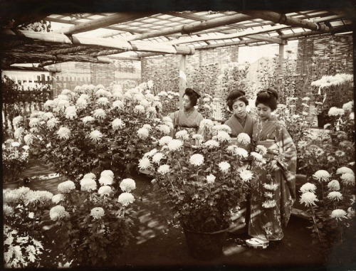 The chrysanthemum show, Tokyo Japan. 1907. From: The UK National Archiives