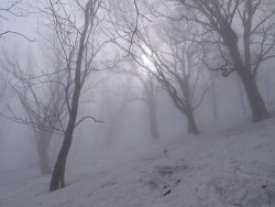 snow winter Black and White landscape trees nature forest mystical foggy