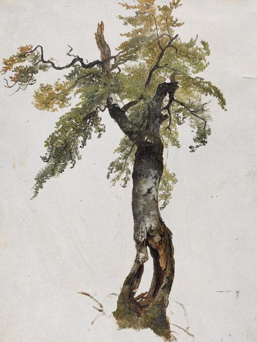 blastedheath:  Attributed to Friedrich Gauermann (1807-1862) Study of a Tree. Oil on paper, 34.5 x 28 cm.