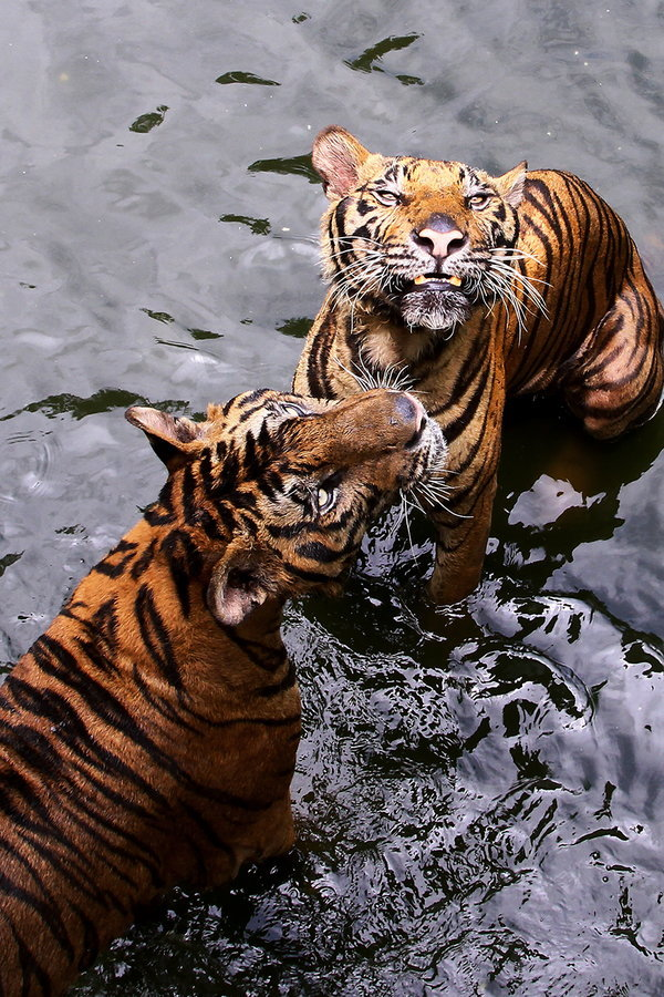 orchestr4:  animalkingd0m:  Twins by Marcellinus Amin  aw!
