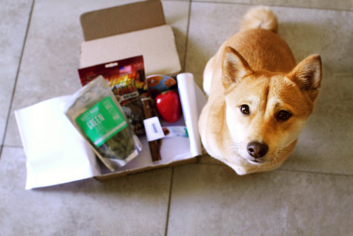 Mika's 1st BarkBox :D It was exciting to find all the nummy goodies inside.