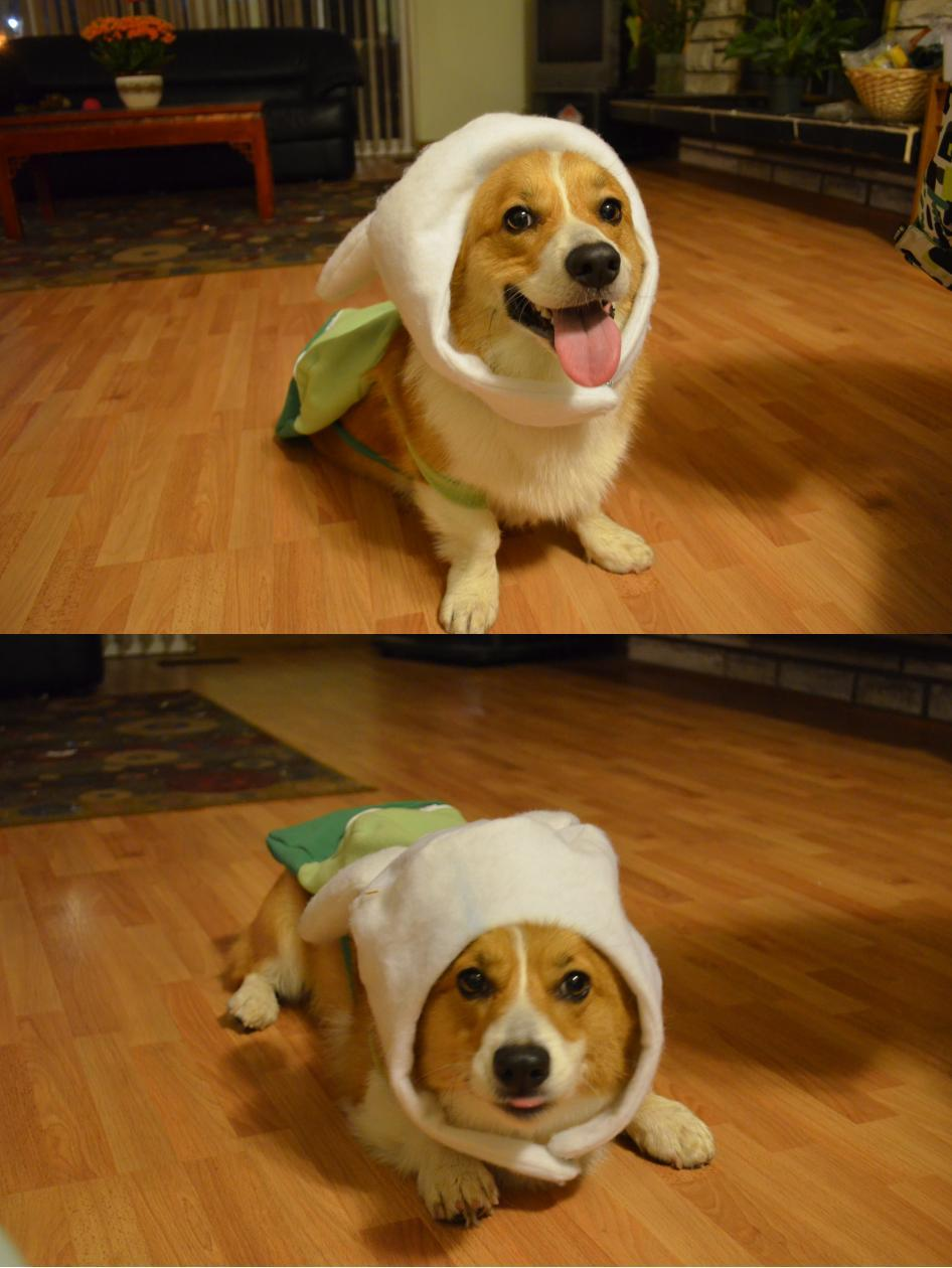 It's the Finn the Corgi!