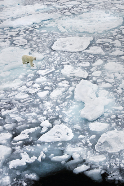 nature-madness:  Polar Bear On Ice