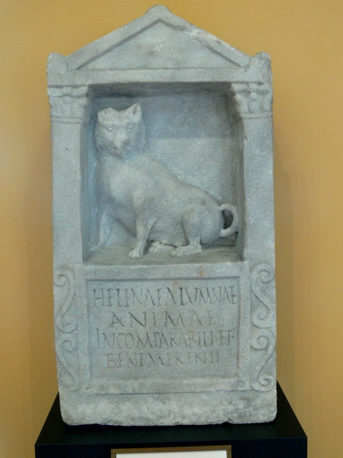 "The Ancient Roman Gravestone of Helena, about A.D. 150 - 200, marble. Courtesy & currently located at the Getty Villa, Malibu:  A Maltese dog in the architectural setting of a naiskos, or small shrine, decorates this Roman grave relief. The inscription on the relief reads, ""To Helena, foster daughter, the incomparable and worthy soul."" Was the Helena commemorated by this sculpture a dog or a girl? The Romans made grave reliefs for animals, but these usually took a different form and their inscriptions specify that they were intended for an animal. On the other hand, funerary monuments for children often show the child with a favorite pet. In this instance, however, the pet is shown alone, which might be more appropriate if Helena was not a high-born Roman. The inscription appears to support this interpretation because the word alumnus, although here translated as ""foster daughter,"" can also mean a slave raised in the house.  Photo taken by Wolfgang Sauber"