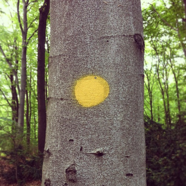 Yellow dot.
