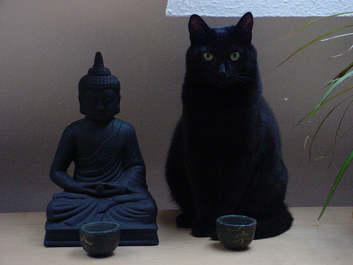 "beingsadhu:  ""I have lived with several Zen masters — all of them cats"" ~ Eckhart Tolle"