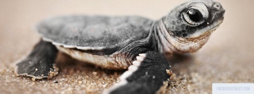 Baby Turtle Facebook Cover