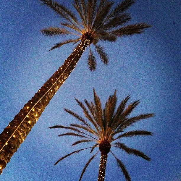 Being home has its perks 🌴🌴#socal #palmtrees