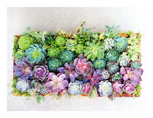 moralnihilism:  Living Wall Art by Tiffany Drage  This inner hipster comes out when succulents are offered.