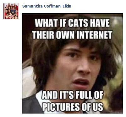 What if cats have their own internet?