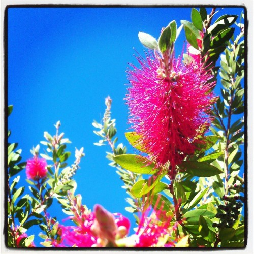 #flower #nature #landscape #perfectContrast #plant #outdoors #tree #sky #closeup #natureLovers #Godscreation #ArtOfZan #zan #AliveNRemaining #AlexanderAmy #AliveAndRemaining #htc