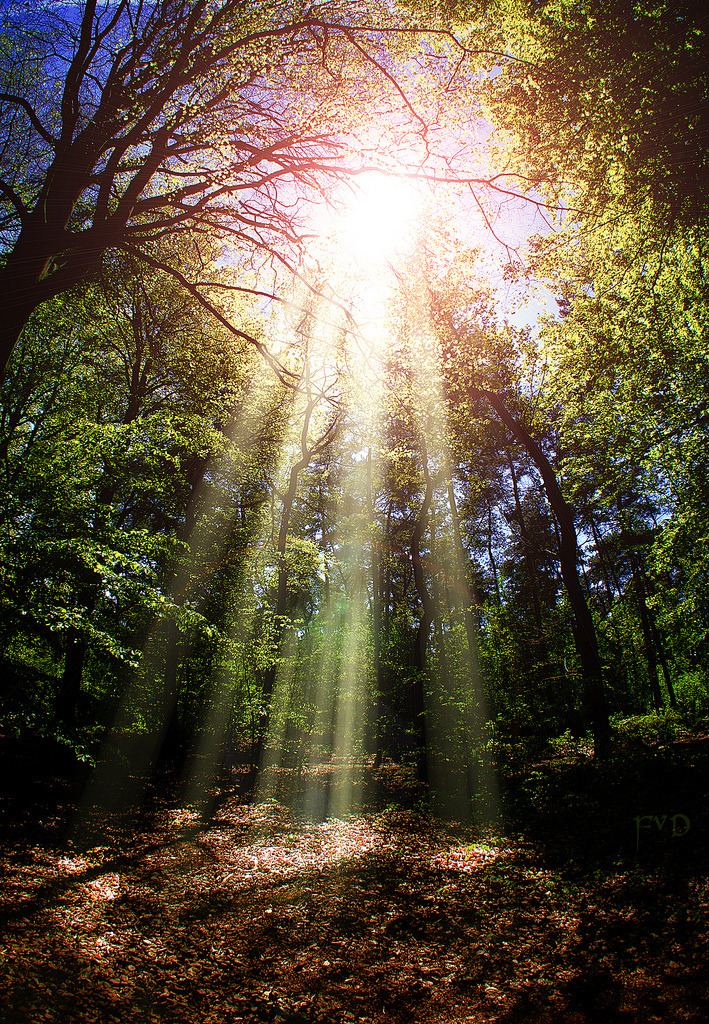 lori-rocks:   Sun Beams (by mrtungsten62-ON/OFF)