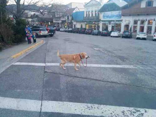A strong independent dog who don't need no man