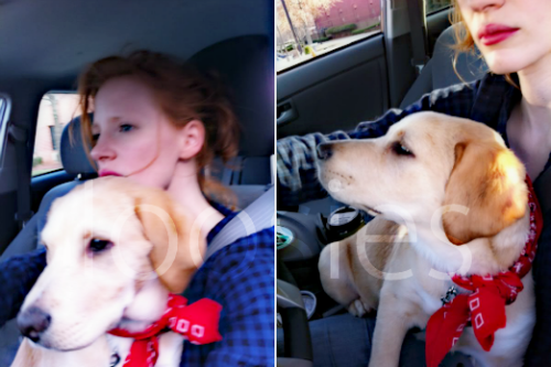 This is supposedly Jessica Chastain & Woodstock, the dog she & Tom adopted while filming Lawless. I don't know how to recognise Woodstock specifically, though… The colour of their noses can change with time and seasons, apparently. Found here, but I don't know where it came from to begin with. Does anyone know anything about it?