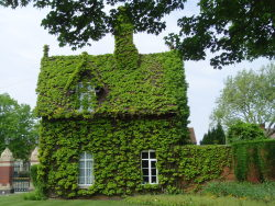 vwcampervan-aldridge:  Boston Ivy covered Gatekeepers Cottage, Dartmouth Park, Sandwell, England.  I have pictures of this cottage thought out the seasons as the ivy changes to Blood red! Today is the 1st Anniversary of vwcampervan-aldridge, these are some of the most popular pictures I have taken from the year. http://www.tumblr.com/blog/vwcampervan-aldridge