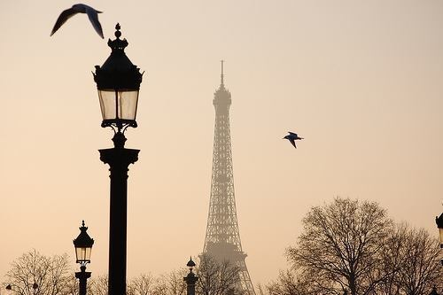 Birds - Paris on We Heart It. http://weheartit.com/entry/53294831/via/shinMerve10