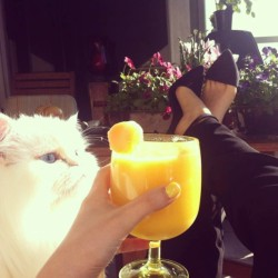 Kitty, Cantaloup smoothie, flowers and sun on the balcony #happiness #Kitty #Cat #Smoothie #Drink #Sunny #vancouver #Balcony #Heels #Flowers #Style #Soundofsweetlullabies #sunday #relaxing #lazysunday