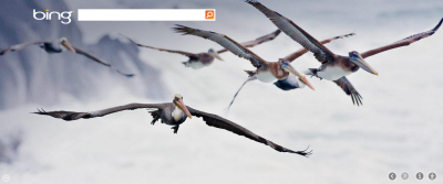 Pelicans in flight, near Bandon, Oregon. www.bing.com
