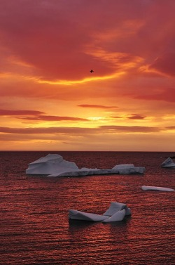 unwrittennature:  Icebergs At Sunset by: Christian Heeb