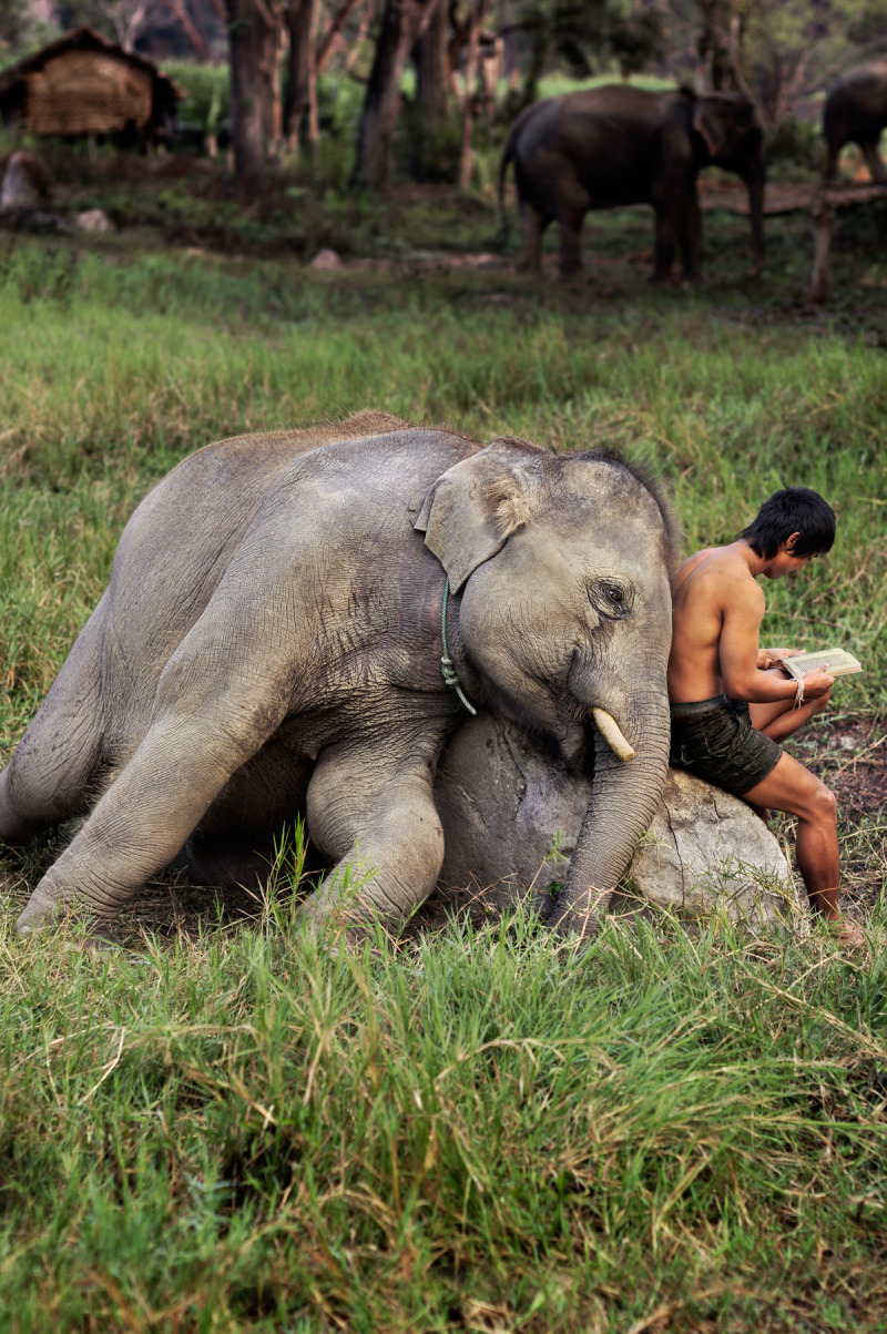 waddvp:  newhybridkilla:  By Steve McCurry     I want an elephant friend