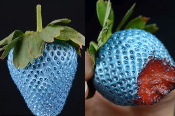 mitunaschoiceasss:  malformalady:  The world's first edible spray paint — the cans, called 'Food Finish,' come in gold, silver, red and blue. The spray paint has no taste by itself and can be applied on any item of food to offer a quirky alternative to regular meals. To give the food a makeover, cooking enthusiasts must spray the paint layer by layer and wait for it to dry to enjoy the perfect finish. The unique idea was created by German food company, The Deli Garage and sell for £21.50 online. Photo credit: Zachary Culpin  Now we can have pretty patties
