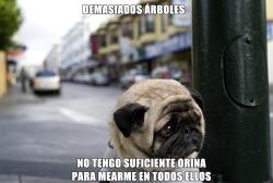 dog tumblr meme humor animal Perro triste divertido propio risas facker