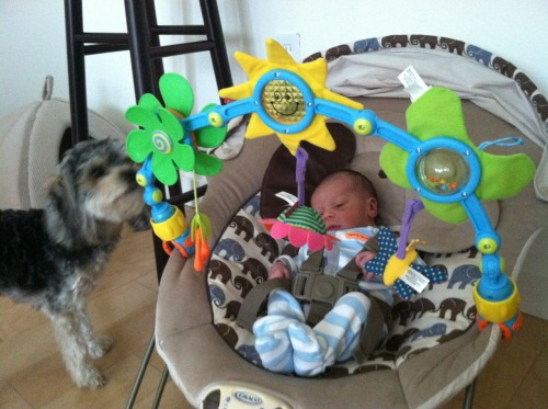 Butters thought the toy bar for Nicholas's bouncer was for her.
