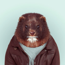 zooportraits:  MINK by Yago Partal for ZOO PORTRAITS