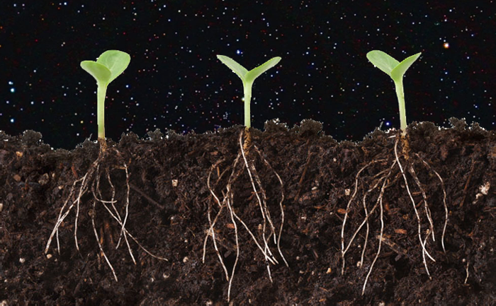"Can plants grow leaves up, roots down … in space? Some new space science is helping to answer that. A plant experiment recently done on the International Space Station showed that plants do not need gravity in order to grow normal root patterns and send their leaves up toward the light. They grow more slowly, but as long as they have a light source above them, they are able to orient their direction of growth just fine (contrary to previous research). We've all seen a houseplant grow toward the light, right? This is a phenomenon called positive phototropism. The microgravity experiment showed that when a plant senses light, it not only grows toward it but sends its roots the other way. The root effect is called negative phototropism, and it seems to be enough to get a normal looking plant in space. Of course it's not that simple, right? Nope. On Earth, it turns out that gravity does help, and plant roots have these dense little ""molecular weights"" that are pulled down by gravity and help a new seed orient the roots downward. They're really cool. So it looks like, for now, that Earth plants use a combination of gravity and light to orient upleaves from downroots, and space plants can do almost as gooda  job with light alone. Bring on the space gardens! Whole Foods Lunar Base by 2020!! Would that count as organic? (if you want to dig deep into the space plant biology, here's the original paper)"