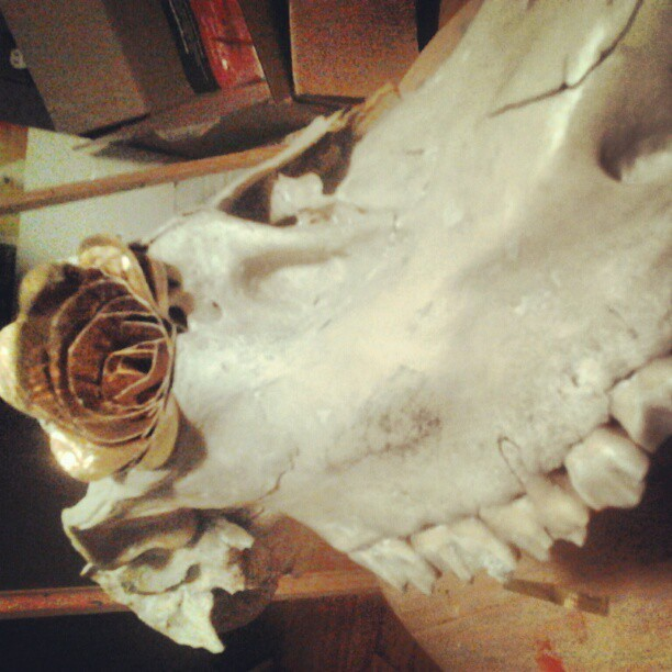autumnberlin:  gold duct tape roses in the eye sockets of my new skull clock!