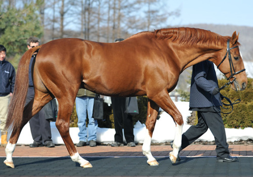 Charismatic in Japan. Such a beautiful boy.
