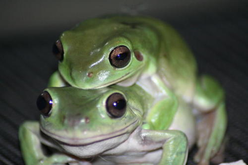 Hey Carol, this is what we'd look like if we were frogs