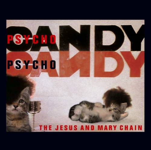 thekittencovers:  The Jesus and Meowy Chain - Psycho Catty  Best kitten cover