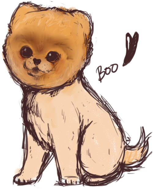 Boo the Pomeranian <3